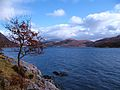 Loch Moidart - geograph.org.uk - 1803315.jpg