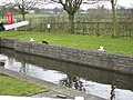 Lockside on the Ripon Canal - geograph.org.uk - 355319.jpg