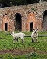 Londesborough lambs - geograph.org.uk - 1231285.jpg