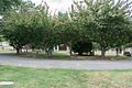 Looking W at McDonald Circle - Glenwood Cemetery - 2014-09-19.jpg