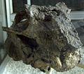 Lystrosaurus1(Skull)-PaleozoologicalMuseumOfChina-May23-08.jpg