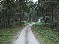 MEANDERING ROADS, JALDAPARA WILDLIFE SANCTUARY.jpg