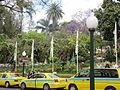 Madeira em Abril de 2011 IMG 1699 (5663164579).jpg