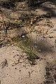 Magnoliophyta sp. (32541395451).jpg