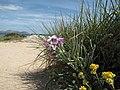 Mallorca - Strandblick im Mai - panoramio.jpg