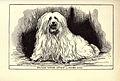 Maltese Terrier BDL.jpg