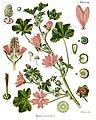 Malva sylvestris - Köhler–s Medizinal-Pflanzen-222.jpg