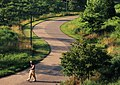 Man walking on the grounds of Gateway Arch National Park. (ac90b211-9867-4973-a9ed-daf0eb60e393).jpg