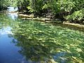 Manatee Springs State Park Florida outlet01.jpg