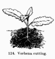 Manual of Gardening fig124.png