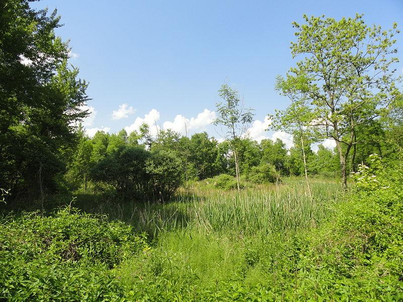 Les marais d'Athis-Cherville (zone Natura 2000 et ZNIEFF).