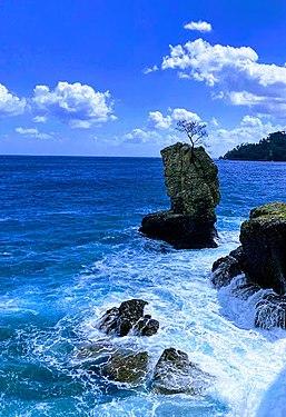 Mare, scogli e albero.jpg