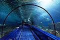 Marineland - aquarium.jpg