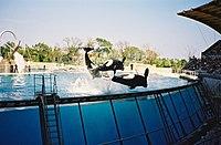 Marineland Antibes 04.jpg