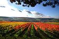 Markelsheim beliebter Wein- un Erholungsort. Blick vom Tauberberg.jpg