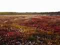 Marsh-lands-dolly-sods - West Virginia - ForestWander.jpg