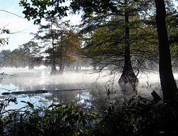 Martin-Dies-Jr-State-Park