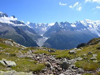 Alpine plant - Image: Massif Mont Blanc 7438