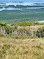 Matakana Island (6778145404).jpg