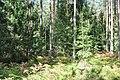 Mežs, Vecumnieku pagasts, Vecumnieku novads, Latvia - panoramio (1).jpg