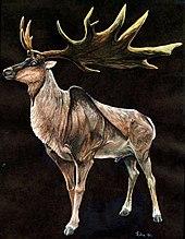 https://upload.wikimedia.org/wikipedia/commons/thumb/e/e5/Megaloceros.jpg/170px-Megaloceros.jpg
