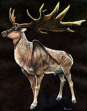 Irish elk - Restoration