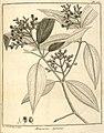 Melastoma agrestis Aublet 1775 pl 166.jpg