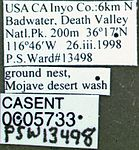 Messor pergandei casent0005733 label 1.jpg