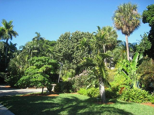 File:Miami Beach Botanical Garden - IMG 8013.JPG - Wikimedia Commons