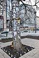 Michael Jackson Memorial Tree, Budapest, Hungary (Ank Kumar) 03.jpg