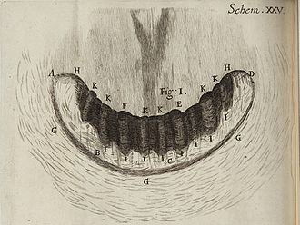 "Land snail - ""The Teeth of a Snail"" from Robert Hooke's Micrographia, 1665. This actually shows the jaw, against which the teeth on the radula act."