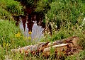 Mink Mountain Meadow (241418999).jpg