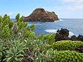 Mole Island.jpg