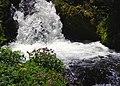 Monkey flowers along creek cascade. (3f1a16d2737548b4817385af7649d393).JPG