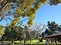 Monterey Park, CA, USA - panoramio (392).jpg