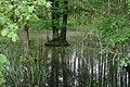 Moshnogory forest lake.JPG