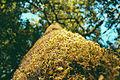 Moss@branch(bugPoV)byPJRVS.jpg