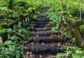 Moss and fern-covered stairway, Oirase Gorge, Aomori Prefecture, Japan.tif