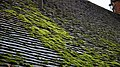 Moss on tiled roof at Nuthurst, West Sussex, England.jpg