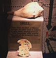 Moundville Whelk shell and gorget HRoe 2010.jpg