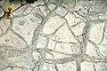 Mudcracks (Belt Supergroup, Mesoproterozoic; Logan Pass, Glacier National Park, Montana, USA) 2.jpg