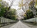 Mukō-jinja-Cherry Blossoms of approach to a shrine.jpg