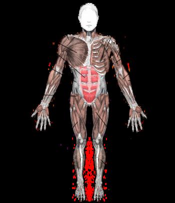 تنبع ضربات القلب الايقاعية المنتظمة من داخل نسيج عضلة القلب نفسها فهي ذاتية  الحركة حيث يبدأ النبض الطبيعي بإشارة كهربائية تُصدر من مولد ومنظم كهربائي  عصبي ...