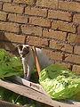 My home cat.jpg