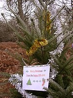 File:Mysteriously decorated fir tree, New Forest - geograph.org.uk - 97175.jpg