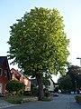 ND Wallstraße 11 DSC01736.jpg