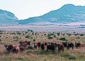 NRCSAZ84004 - Arizona (501)(NRCS Photo Gallery).jpg