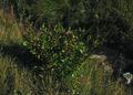 NRCSMT01051 - Montana (4951)(NRCS Photo Gallery).tif
