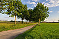 NSG 2168 Nußlocher Wiesen-Fahrradweg.jpg