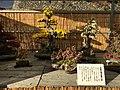 Nagoya Castle Chrysanthemum Competition 2017 05.jpg
